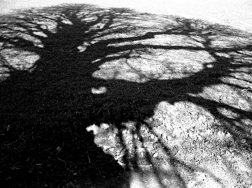 An aged oak tree atop Meon Hill casts a menacing shadow